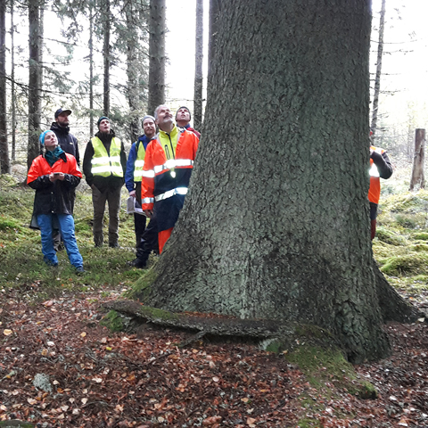 Skogsm�starskolan bes�kte AB Karl Hedin