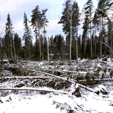 Stormen Alfrida drabbar skogsägare