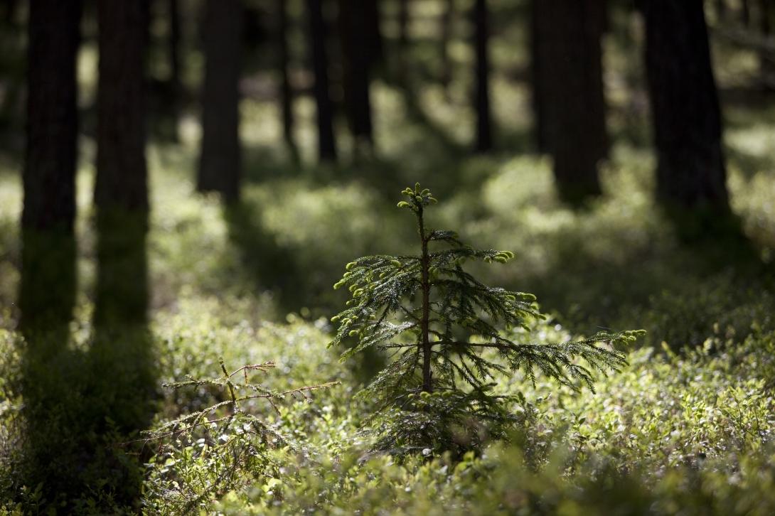 Liten planta i skog