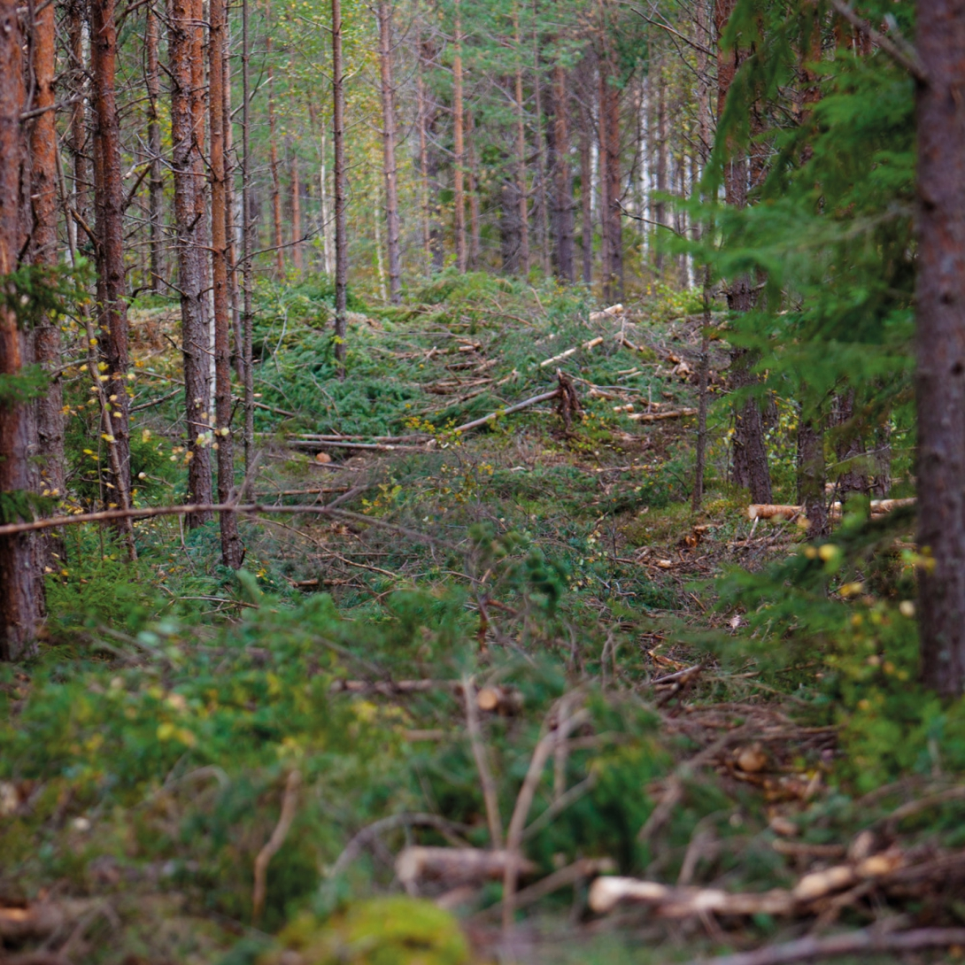 skogsbränsle huvudstråk basstråk